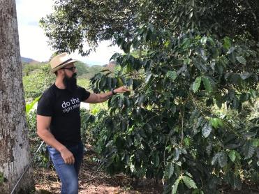 Daniel showing a coffee plant