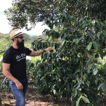 Daniel showing a coffee plant