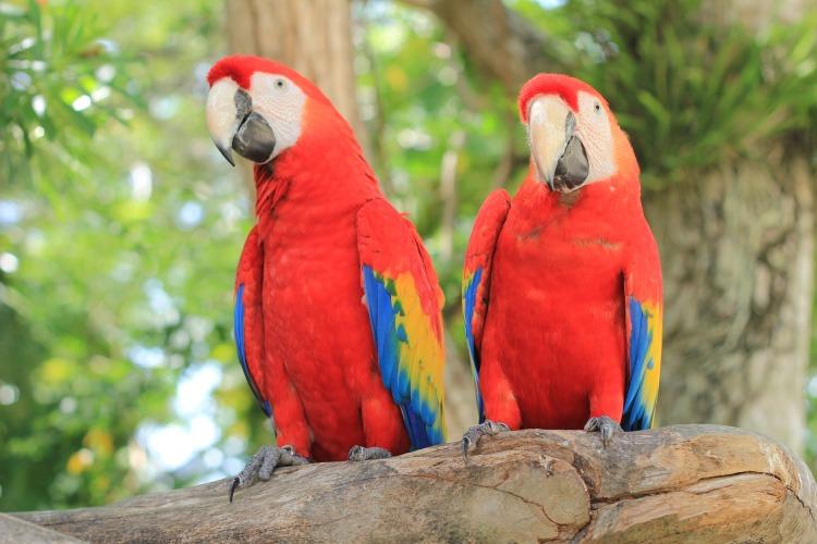 parrot-2708091_1920
