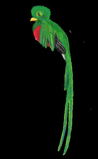 quetzal-1088589_1920